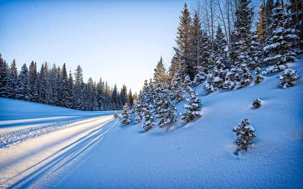 Bending Light of winter around ever greens by Mark Ruckman