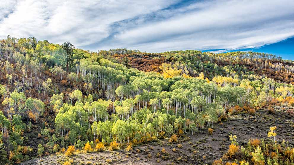 Electric Hill of Aspen Trees in the fall by Mark Ruckman