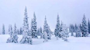 Frozen Evergreen Trees show the weigh of winter and Solitude State Line Storm and Windmill by Mark Ruckman