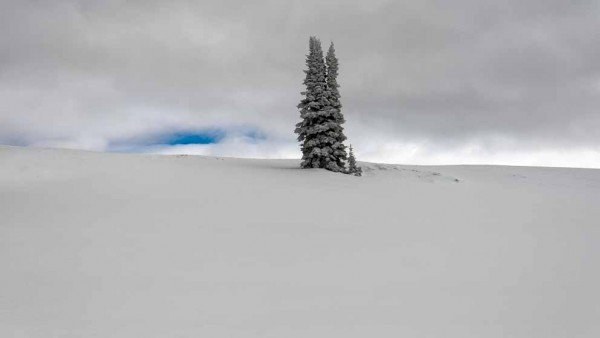 A long Pine Tree stands alone in winter's Tranquility by Mark Ruckman