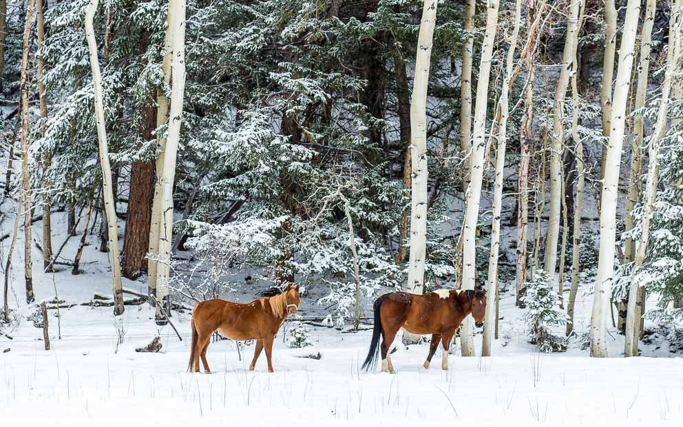 Winter Mountain Horses by Mark Ruckman