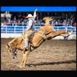 Bucking Cowboy