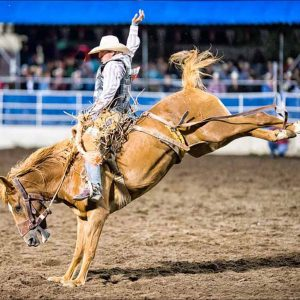 Cowboy rides a Bareback Bucking Bronco by Mark Ruckman