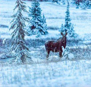 High Plains Drifter - Moose by Mark Ruckman