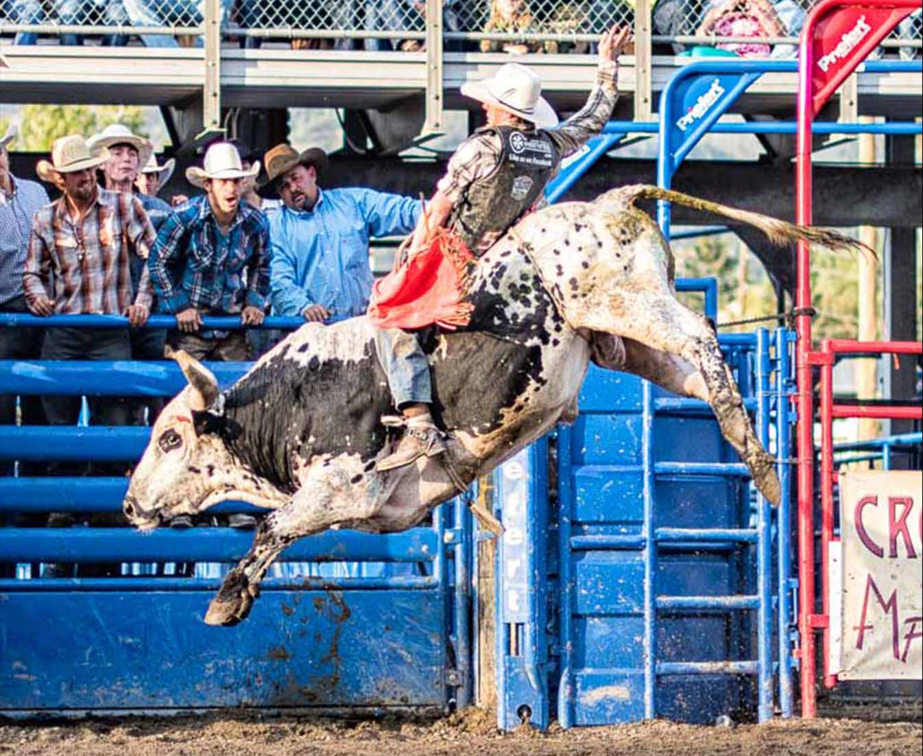 Bull Rider during Rodeo Days by Mark Ruckman